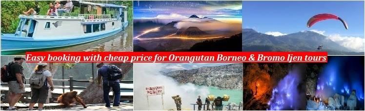 ijen tours, bromo tours, orangutan tours, borneo orangutan tours