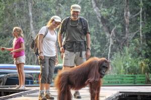 orangutan tours borneo