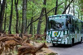 taman safari prigen tour, prigen taman safari tour, bromo tour taman safari