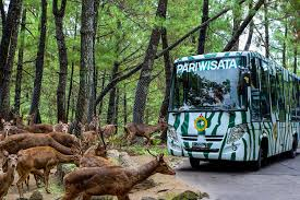 taman safari prigen tour