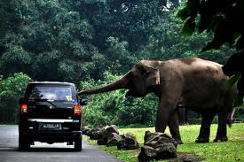 taman safari pasuruan tour, taman safari 2 prigen