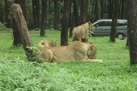 taman safari prigen tour java