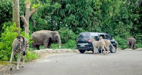 taman safari prigen trip java