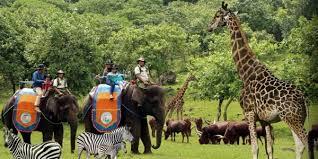 taman safari tour, taman safari prigen tours, optional bromo tours