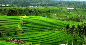 Bali culture & adventure trip for 2 days to Ubud village, Kintamani, water sport, Suluban beach & Ul
