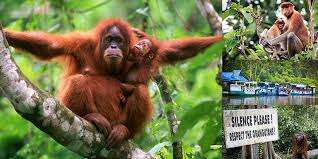 Bali to Pangkalan Bun Airport in Central Kalimantan for Borneo Orangutan Tours with Borneo Jungle Tr