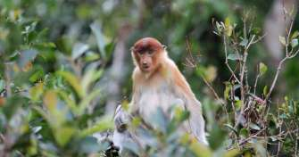 Bali to Pangkalan Bun by a flight via Surabaya airport to enjoy orangutan tours Borneo & houseboat t