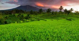 Bali to Ijen Crater Tour then to Surabaya or Malang 2D
