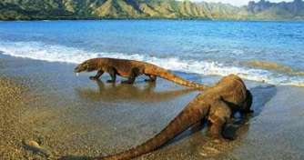 Best trip from Bali for Komodo Tours, Java Tours & Orangutan Borneo tours for 14 days trip