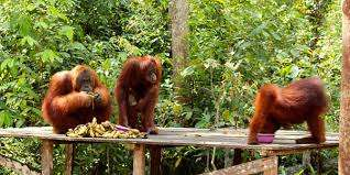 Fly from Bali to Borneo Orangutan Tours 4D