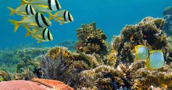 Group trip from Bali for Snorkeling tours Menjangan Island, blue fire Ijen and Bromo sunrise tours