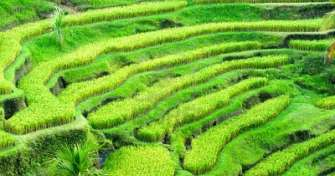 Bali one day trip for Ubud Village & Kintamani Tours