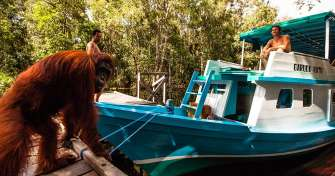 Best Borneo trip for Orangutan Tours in Camp Leakey of Tanjung Puting National Park