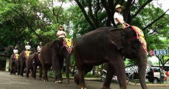 Java tour package for Taman Safari, Bromo Tours, Water Rafting,Plantation Trip,  Ijen Tours & back t