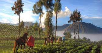 Yogyakarta fly to Surabaya or Malang & enjoy Bromo Sunrise Tours then continue to Bali island