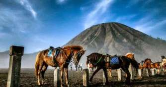 Yogya to Surabaya by a train & drive for Bromo Tours 2D