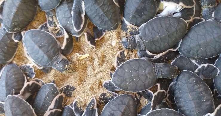 Surabaya to Ijen Sukamade Bromo & Paragliding Tour 4D